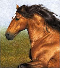 Pferde Gemälde Andalusier