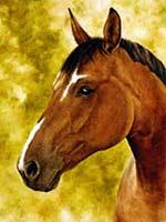 Pferdegemälde  - Pferdeportrait